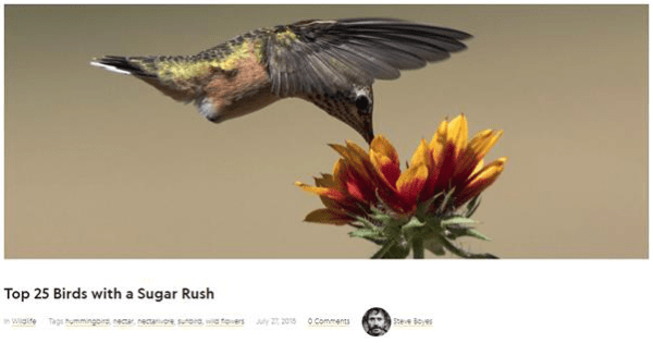 top-25-birds-with-a-sugar-rush